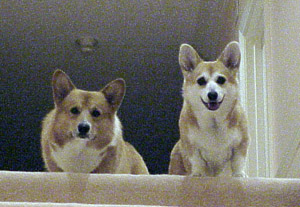 Guido and Vera, ready to catch a tennis ball thrown up the stairs